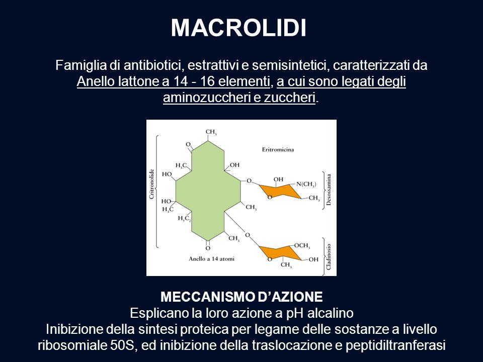 Famiglia di antibiotici, estrattivi e semisintetici, caratterizzati da Anello lattone a 14 - 16 elementi, a cui sono legati degli aminozuccheri e zucc