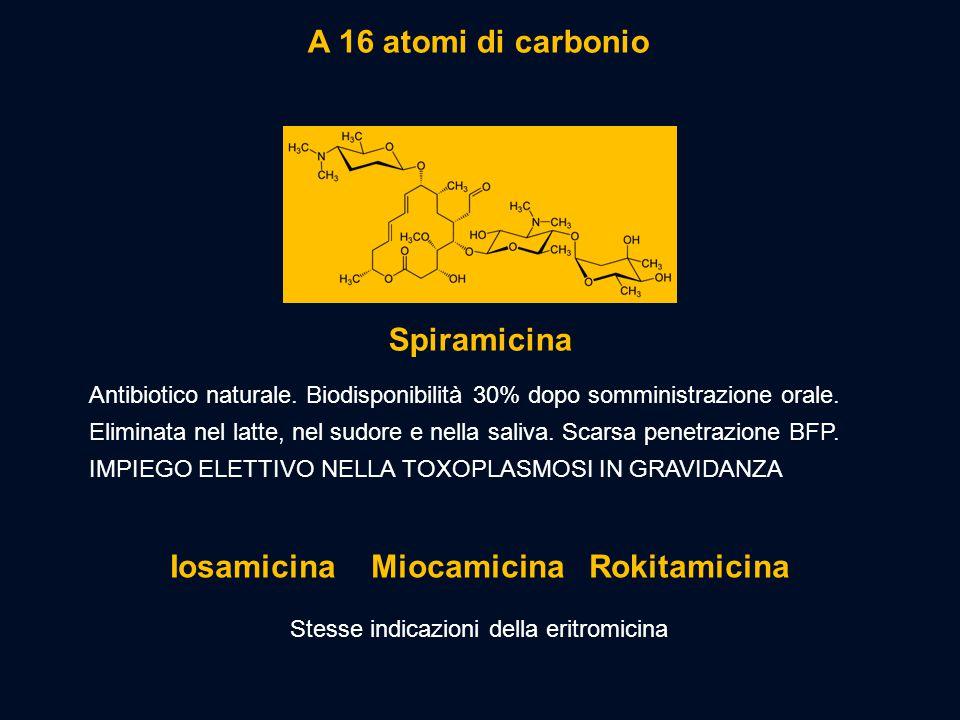 A 16 atomi di carbonio Antibiotico naturale. Biodisponibilità 30% dopo somministrazione orale. Eliminata nel latte, nel sudore e nella saliva. Scarsa