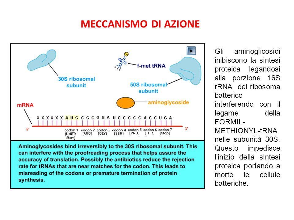 MECCANISMI DI RESISTENZA 1)Produzione di enzimi che inattivano gli aminoglicosidi per adenililazione, acetilazione e fosforilazione 2)Incapacità ad entrare nella cellula batterica 3)Target proteico alterato