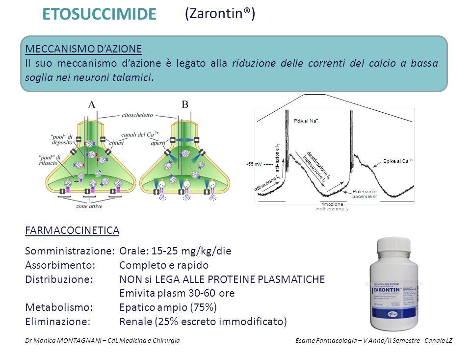 ETOSUCCIMIDE (Zarontin®) FARMACOCINETICA Somministrazione: Orale: 15-25 mg/kg/die Assorbimento:Completo e rapido Distribuzione:NON si LEGA ALLE PROTEI