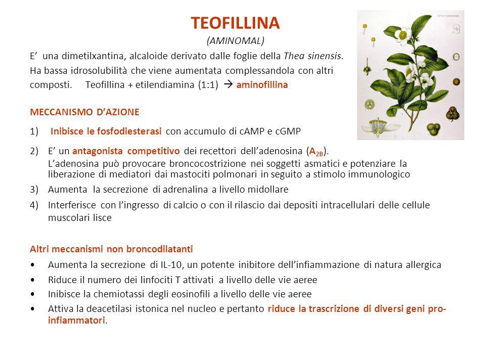 E' una dimetilxantina, alcaloide derivato dalle foglie della Thea sinensis. Ha bassa idrosolubilità che viene aumentata complessandola con altri compo