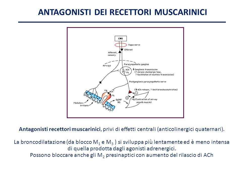 ANTAGONISTI DEI RECETTORI MUSCARINICI Antagonisti recettori muscarinici, privi di effetti centrali (anticolinergici quaternari). La broncodilatazione