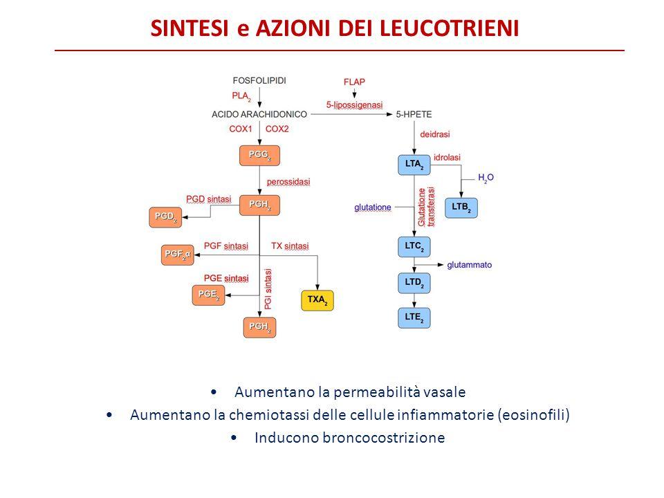 SINTESI e AZIONI DEI LEUCOTRIENI Aumentano la permeabilità vasale Aumentano la chemiotassi delle cellule infiammatorie (eosinofili) Inducono broncocos