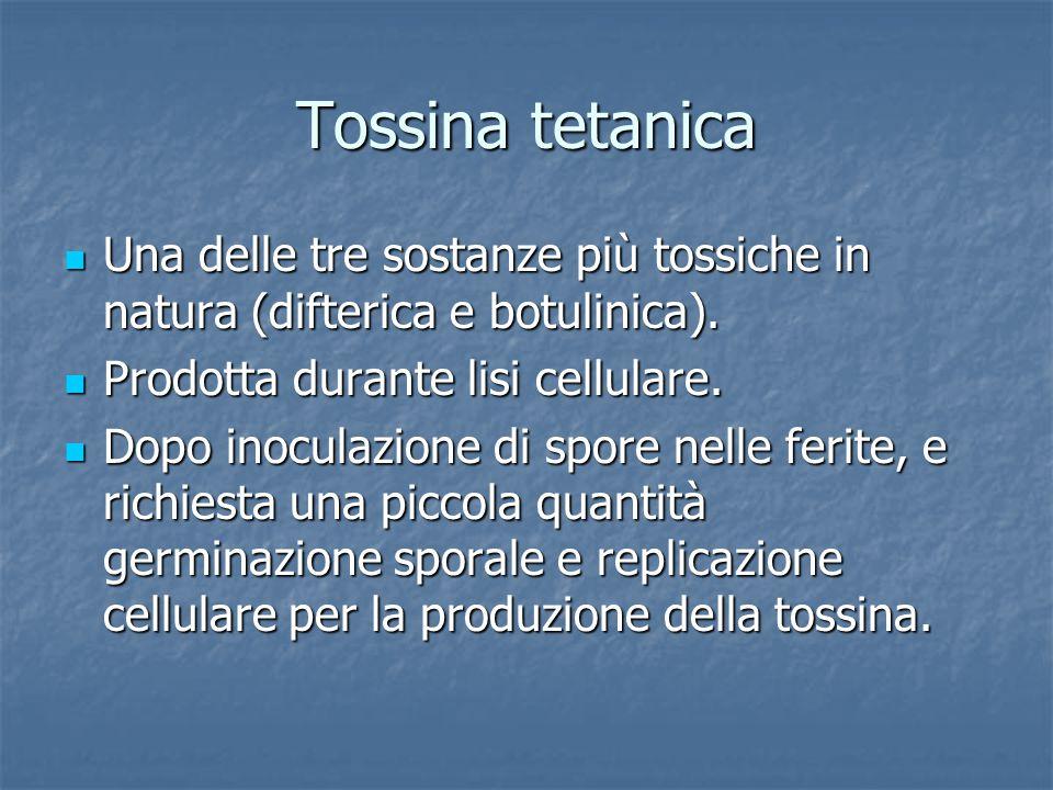 Tossina tetanica Una delle tre sostanze più tossiche in natura (difterica e botulinica). Una delle tre sostanze più tossiche in natura (difterica e bo