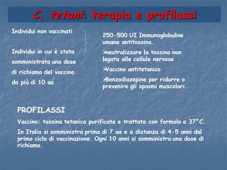 Individui non vaccinati Individui in cui è stata somministrata una dose di richiamo del vaccino da più di 10 aa C. tetani: terapia e profilassi 250-50
