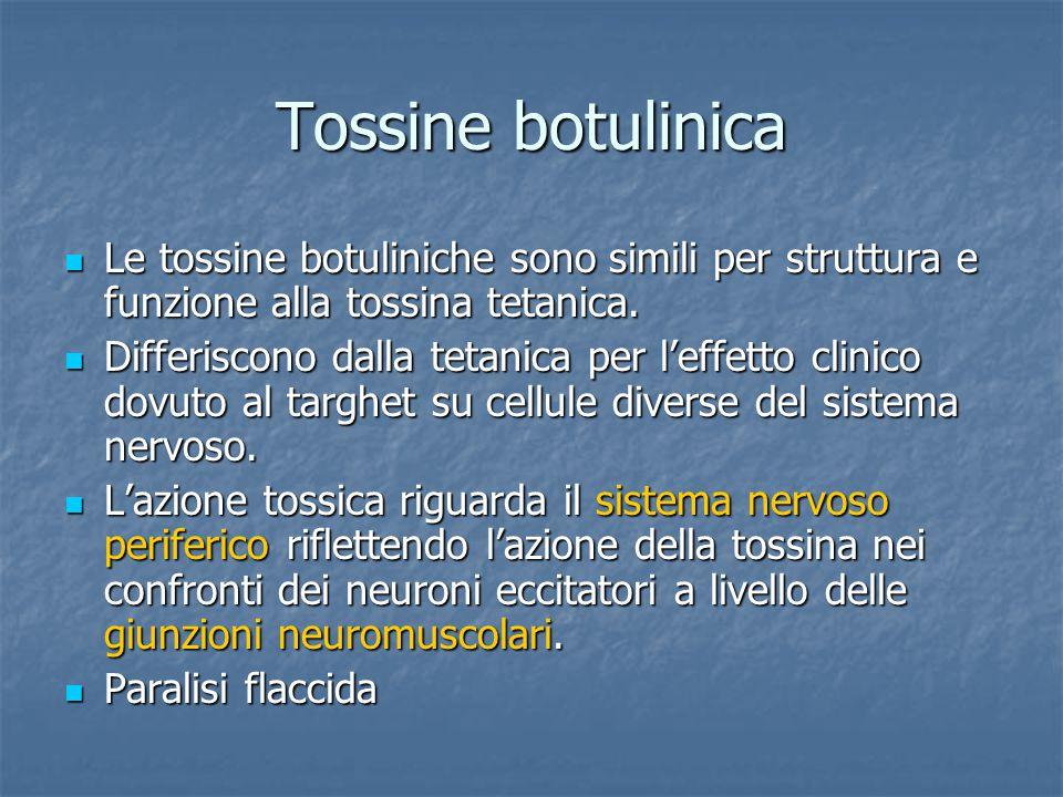 Tossine botulinica Le tossine botuliniche sono simili per struttura e funzione alla tossina tetanica. Le tossine botuliniche sono simili per struttura