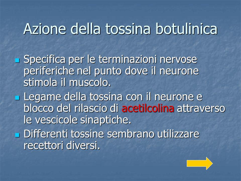 Azione della tossina botulinica Specifica per le terminazioni nervose periferiche nel punto dove il neurone stimola il muscolo. Specifica per le termi