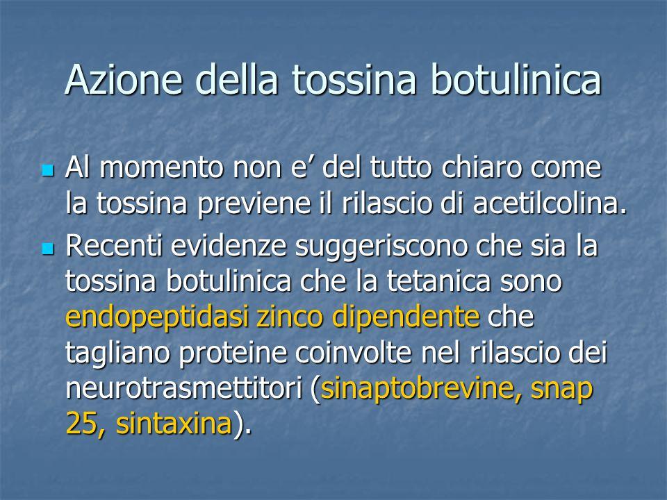 Azione della tossina botulinica Al momento non e' del tutto chiaro come la tossina previene il rilascio di acetilcolina. Al momento non e' del tutto c