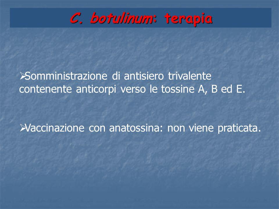 C. botulinum: terapia  Somministrazione di antisiero trivalente contenente anticorpi verso le tossine A, B ed E.  Vaccinazione con anatossina: non v