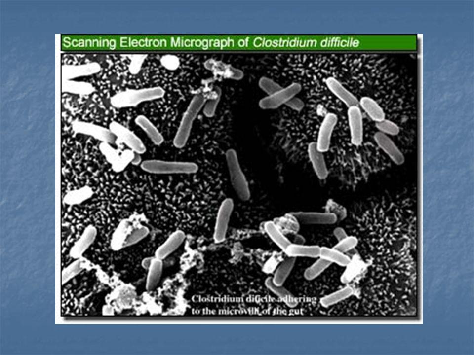 Clostridium difficile Patogeno che causa AAD (diarrea associata ad antibiotici) e patologie intestinali più serie come colite e colite pseudomembranosa.