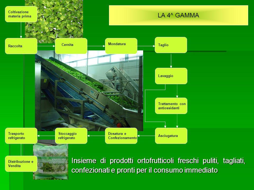 LA 4^ GAMMA Insieme di prodotti ortofrutticoli freschi puliti, tagliati, confezionati e pronti per il consumo immediato Coltivazione materia prima Rac
