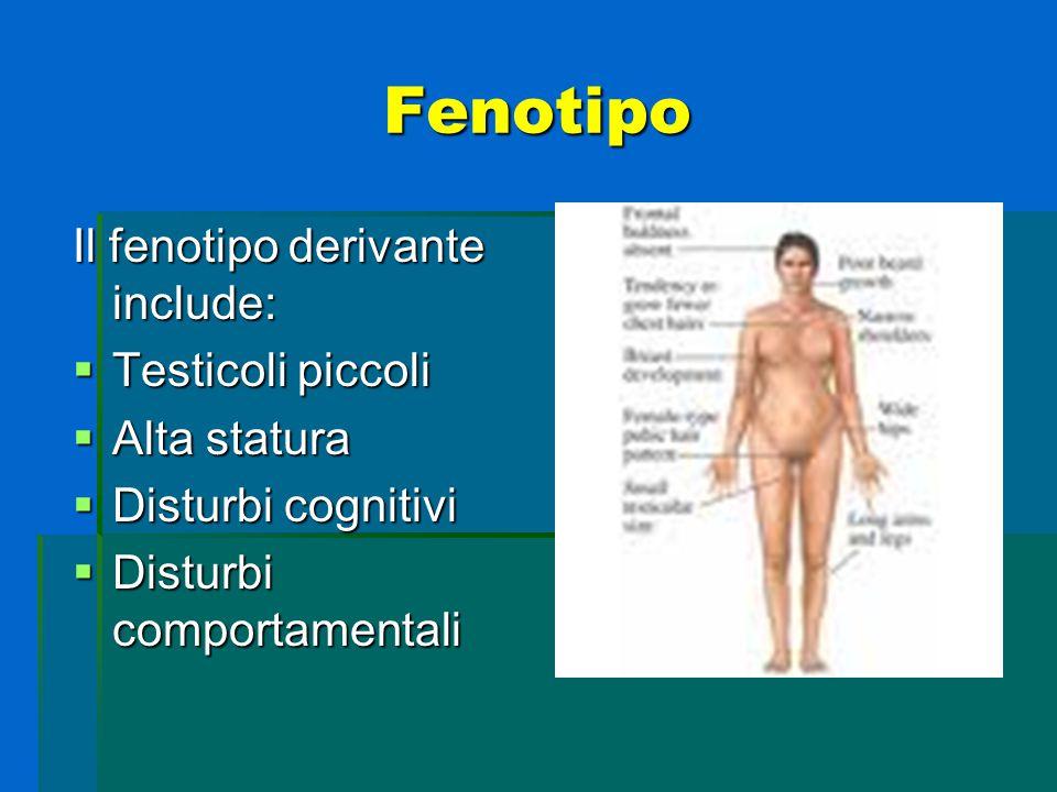 Fenotipo Il fenotipo derivante include:  Testicoli piccoli  Alta statura  Disturbi cognitivi  Disturbi comportamentali