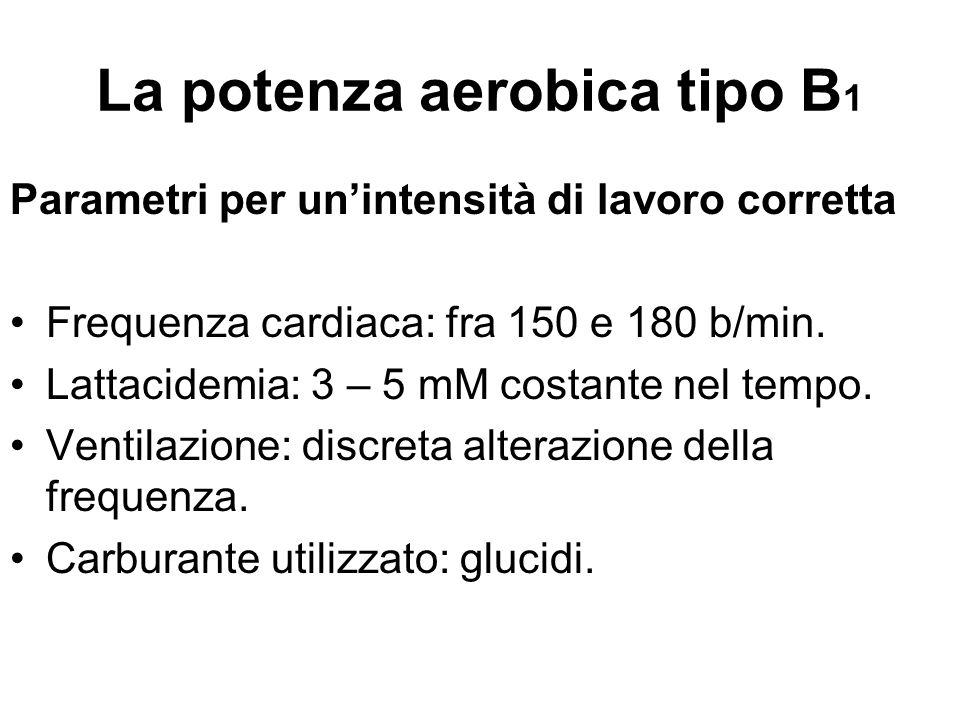 La potenza aerobica tipo B 1 Parametri per un'intensità di lavoro corretta Frequenza cardiaca: fra 150 e 180 b/min. Lattacidemia: 3 – 5 mM costante ne