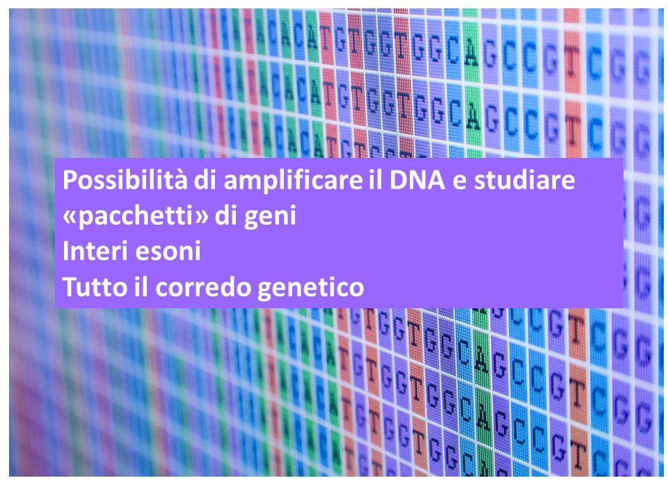 Possibilità di amplificare il DNA e studiare «pacchetti» di geni Interi esoni Tutto il corredo genetico