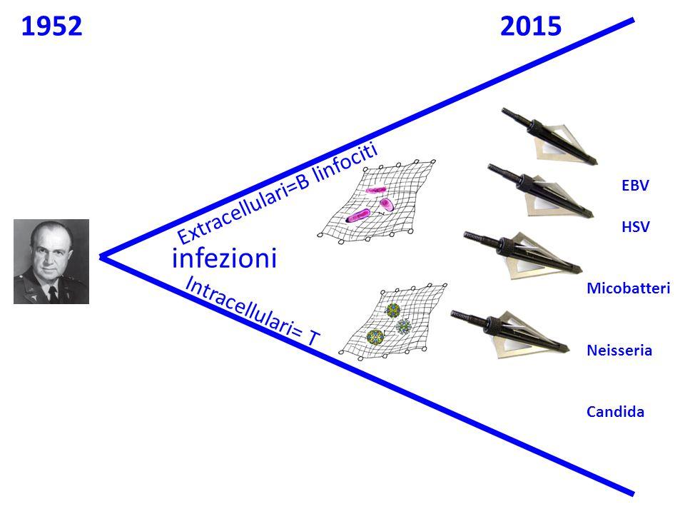 infezioni Extracellulari=B linfociti Intracellulari= T EBV HSV Micobatteri Neisseria Candida 19522015