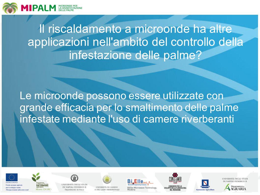 Il riscaldamento a microonde ha altre applicazioni nell ambito del controllo della infestazione delle palme.