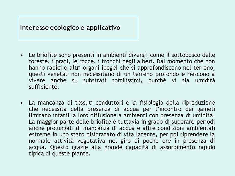 Interesse ecologico e applicativo Le briofite sono presenti in ambienti diversi, come il sottobosco delle foreste, i prati, le rocce, i tronchi degli