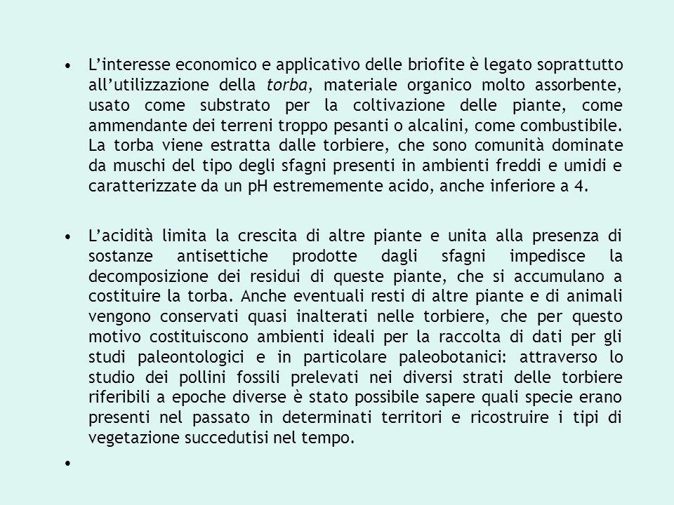 L'interesse economico e applicativo delle briofite è legato soprattutto all'utilizzazione della torba, materiale organico molto assorbente, usato come