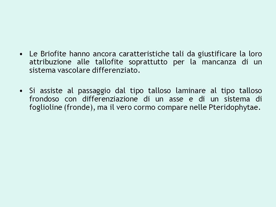 Le Briofite hanno ancora caratteristiche tali da giustificare la loro attribuzione alle tallofite soprattutto per la mancanza di un sistema vascolare