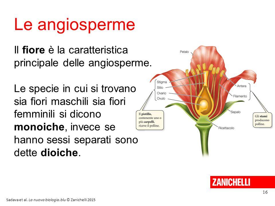 Le angiosperme 16 Il fiore è la caratteristica principale delle angiosperme. Le specie in cui si trovano sia fiori maschili sia fiori femminili si dic