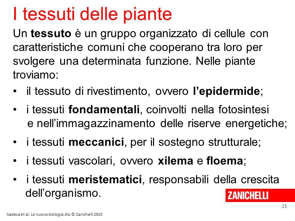 I tessuti delle piante 21 Sadava et al.