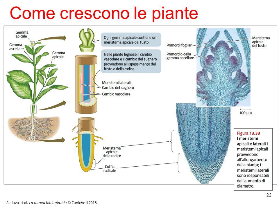 Come crescono le piante 22 Sadava et al. La nuova biologia.blu © Zanichelli 2015