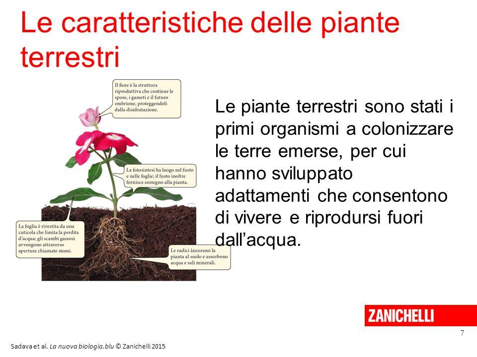 Le caratteristiche delle piante terrestri 7 Le piante terrestri sono stati i primi organismi a colonizzare le terre emerse, per cui hanno sviluppato adattamenti che consentono di vivere e riprodursi fuori dall'acqua.