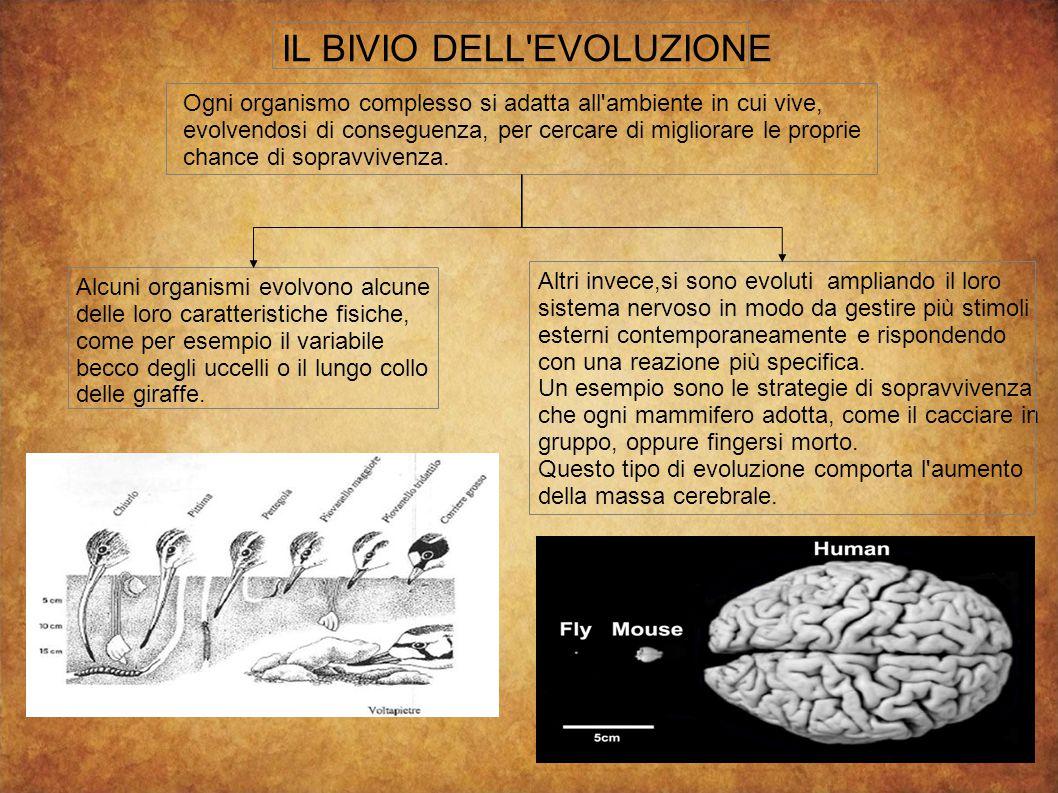 IL BIVIO DELL'EVOLUZIONE Ogni organismo complesso si adatta all'ambiente in cui vive, evolvendosi di conseguenza, per cercare di migliorare le proprie