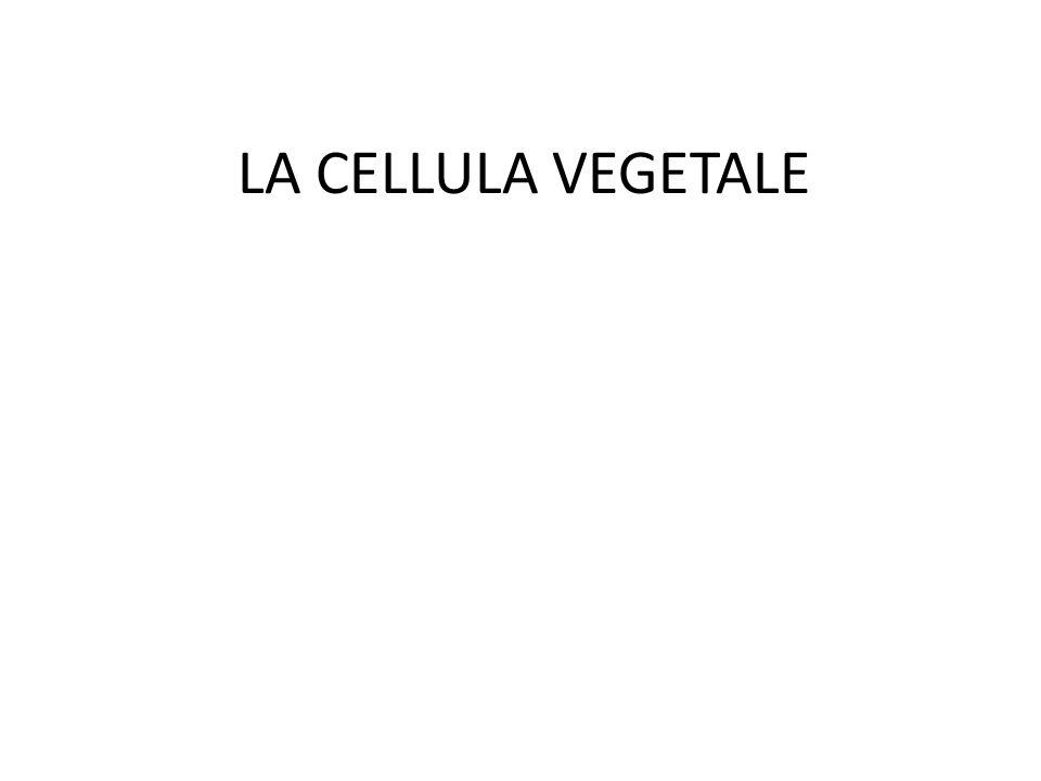 LA CELLULA VEGETALE