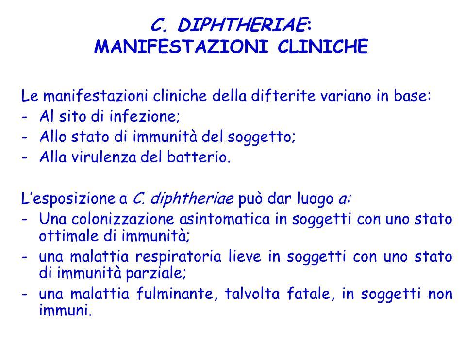 C. DIPHTHERIAE: MANIFESTAZIONI CLINICHE Le manifestazioni cliniche della difterite variano in base: -Al sito di infezione; -Allo stato di immunità del