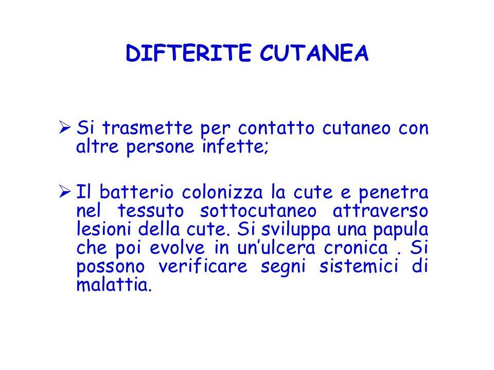 DIFTERITE CUTANEA  Si trasmette per contatto cutaneo con altre persone infette;  Il batterio colonizza la cute e penetra nel tessuto sottocutaneo at