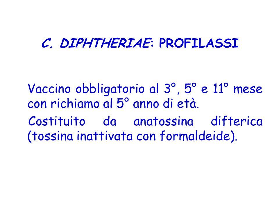 C. DIPHTHERIAE: PROFILASSI Vaccino obbligatorio al 3°, 5° e 11° mese con richiamo al 5° anno di età. Costituito da anatossina difterica (tossina inatt