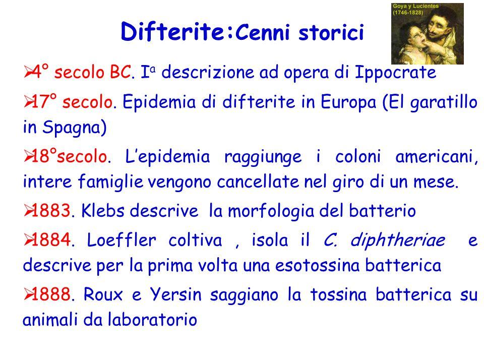 Difterite: Cenni storici  4° secolo BC. I a descrizione ad opera di Ippocrate  17° secolo. Epidemia di difterite in Europa (El garatillo in Spagna)
