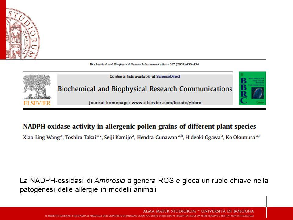 La NADPH-ossidasi di Ambrosia a genera ROS e gioca un ruolo chiave nella patogenesi delle allergie in modelli animali