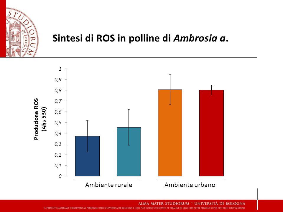 Sintesi di ROS in polline di Ambrosia a. Ambiente ruraleAmbiente urbano