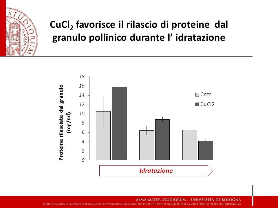 CuCl 2 favorisce il rilascio di proteine dal granulo pollinico durante l' idratazione Idratazione