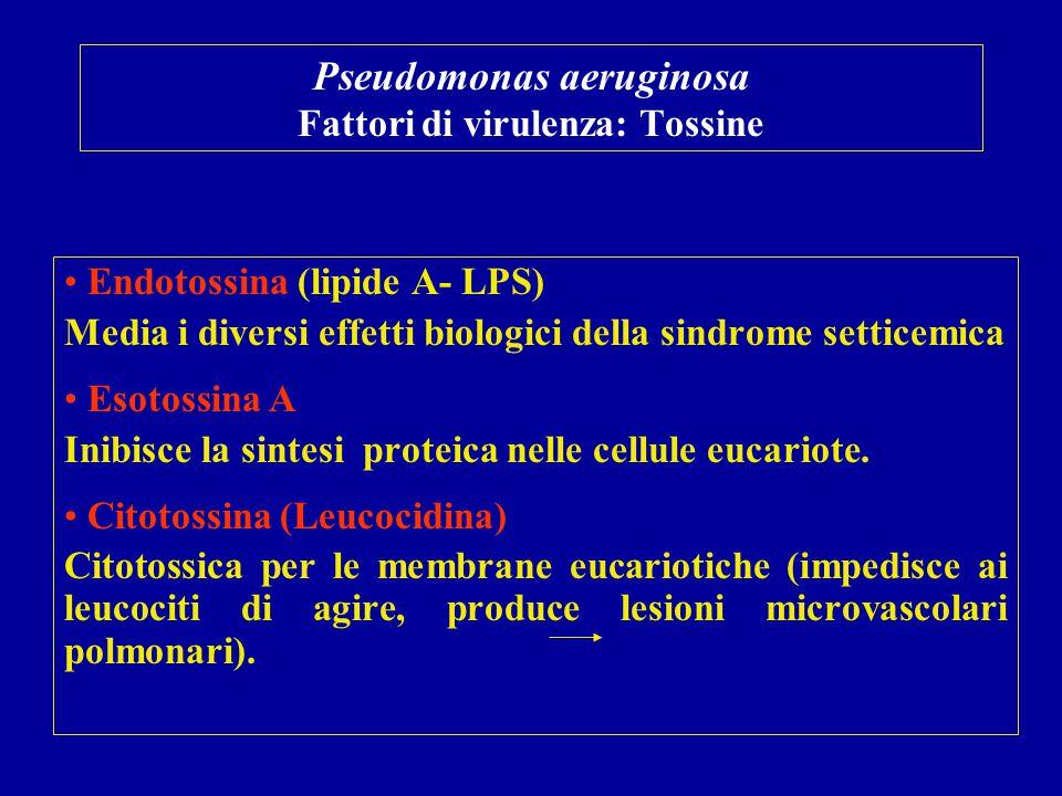 Pseudomonas aeruginosa Fattori di virulenza: Tossine Endotossina (lipide A- LPS) Media i diversi effetti biologici della sindrome setticemica Esotossi