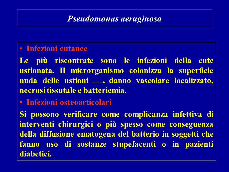 Pseudomonas aeruginosa Infezioni cutanee Le più riscontrate sono le infezioni della cute ustionata. Il microrganismo colonizza la superficie nuda dell