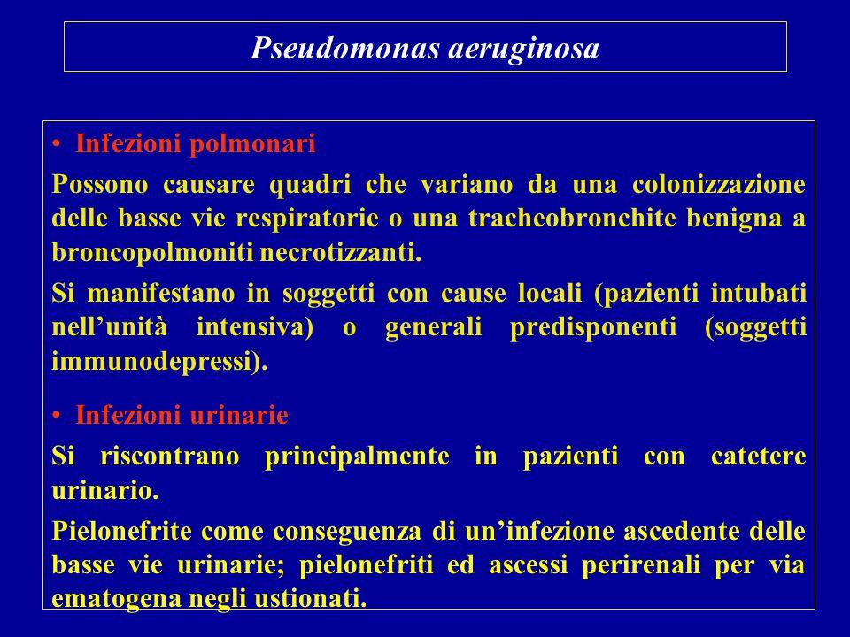 Pseudomonas aeruginosa Infezioni polmonari Possono causare quadri che variano da una colonizzazione delle basse vie respiratorie o una tracheobronchit