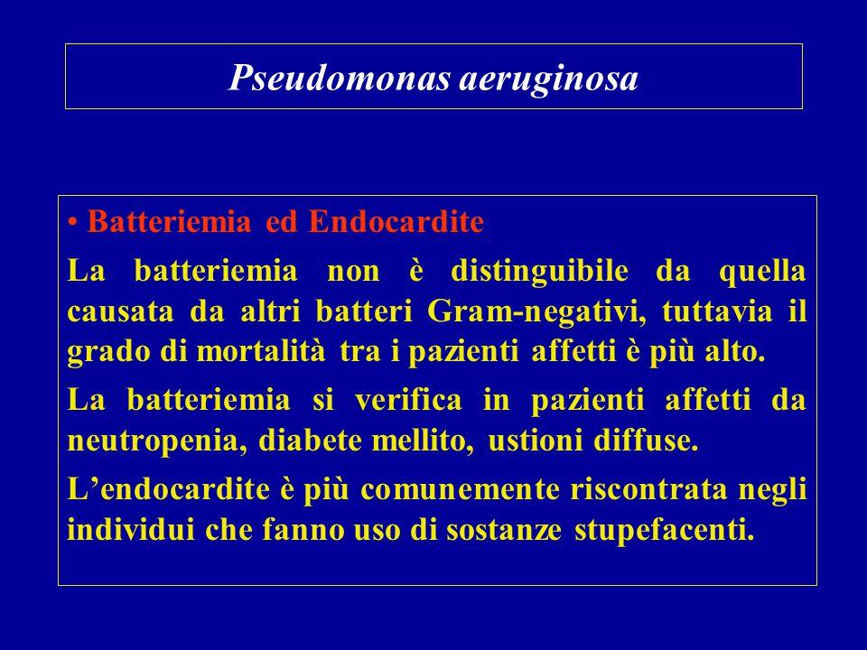 Pseudomonas aeruginosa Batteriemia ed Endocardite La batteriemia non è distinguibile da quella causata da altri batteri Gram-negativi, tuttavia il gra