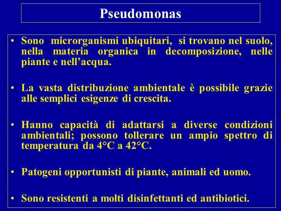 Pseudomonas aeruginosa Infezioni Generalmente non provoca infezioni umane se non in particolari condizioni (traumi, ustioni, impianti protesici, individui immunocompromessi).