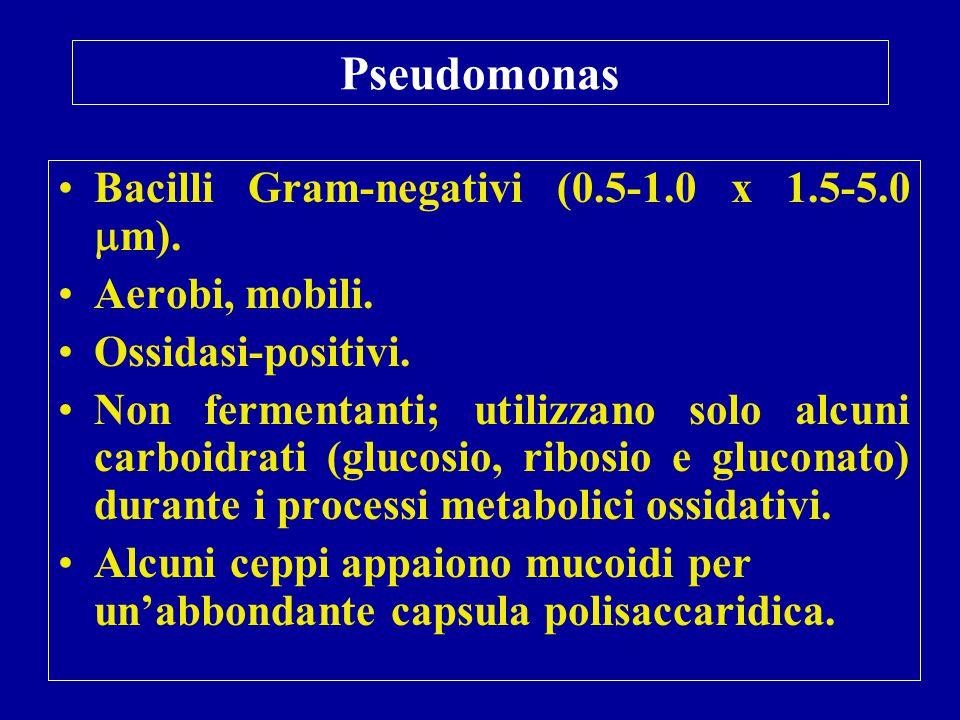 Pseudomonas Bacilli Gram-negativi (0.5-1.0 x 1.5-5.0  m). Aerobi, mobili. Ossidasi-positivi. Non fermentanti; utilizzano solo alcuni carboidrati (glu