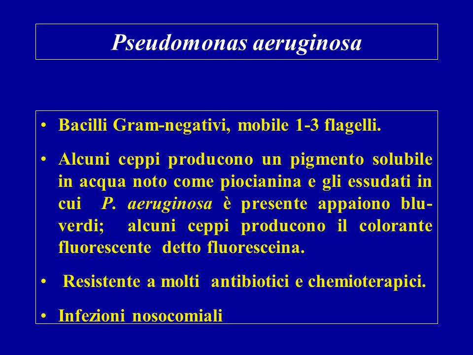 Pseudomonas aeruginosa Bacilli Gram-negativi, mobile 1-3 flagelli. Alcuni ceppi producono un pigmento solubile in acqua noto come piocianina e gli ess