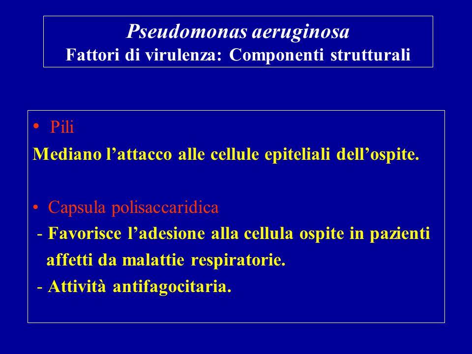 Pseudomonas aeruginosa Fattori di virulenza: Componenti strutturali Pili Mediano l'attacco alle cellule epiteliali dell'ospite. Capsula polisaccaridic