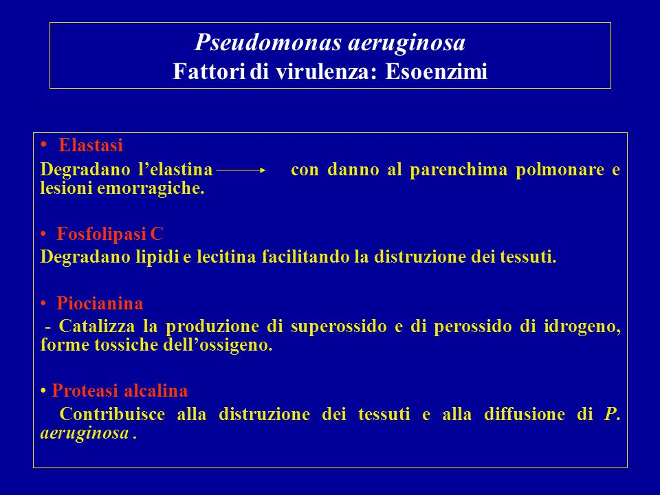 Pseudomonas aeruginosa Fattori di virulenza: Esoenzimi Elastasi Degradano l'elastina con danno al parenchima polmonare e lesioni emorragiche. Fosfolip