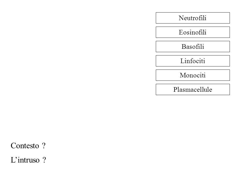 Neutrofili Eosinofili Basofili Linfociti Monociti Plasmacellule Contesto ? L'intruso ?