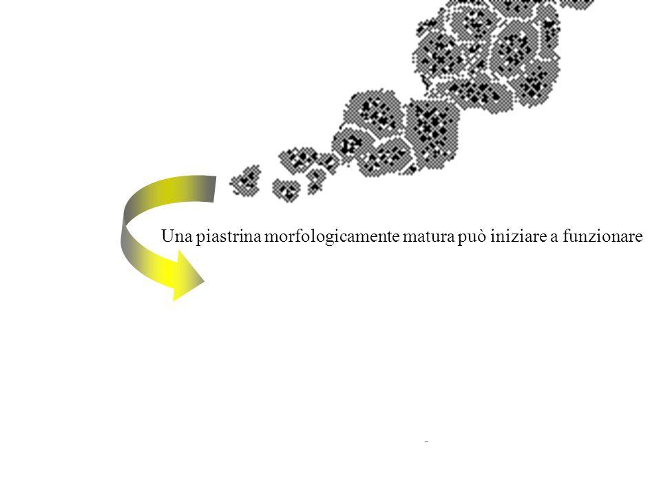 Una piastrina morfologicamente matura può iniziare a funzionare