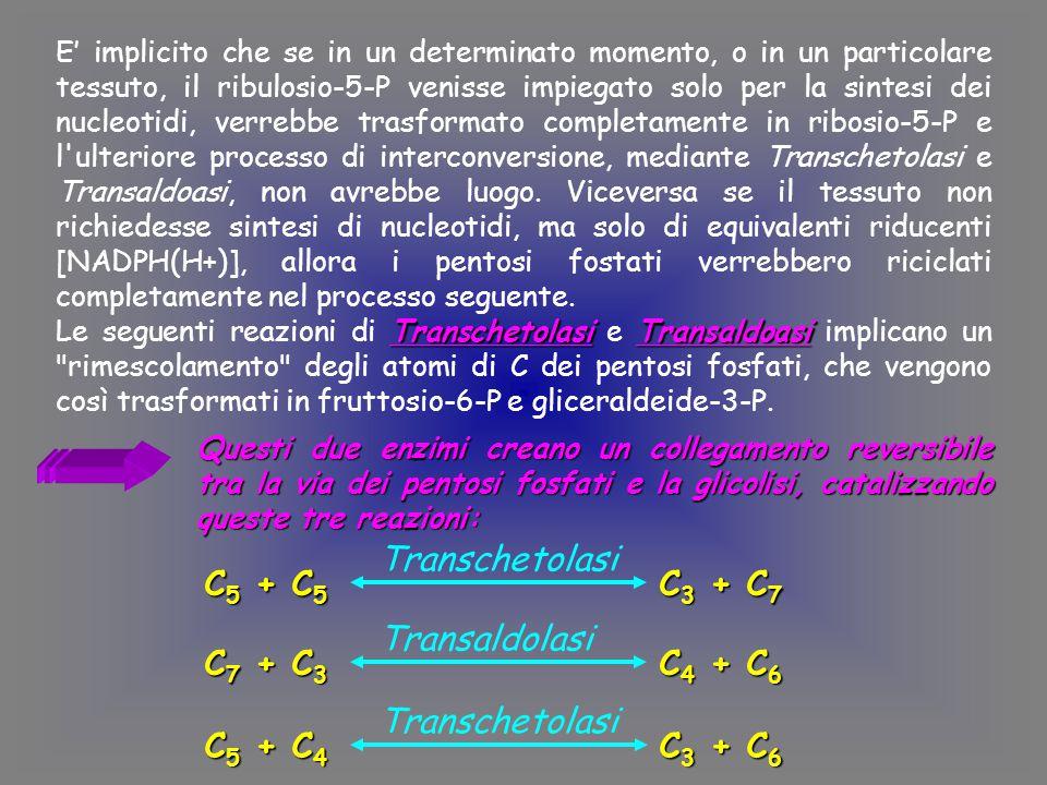 E' implicito che se in un determinato momento, o in un particolare tessuto, il ribulosio-5-P venisse impiegato solo per la sintesi dei nucleotidi, verrebbe trasformato completamente in ribosio-5-P e l ulteriore processo di interconversione, mediante Transchetolasi e Transaldoasi, non avrebbe luogo.