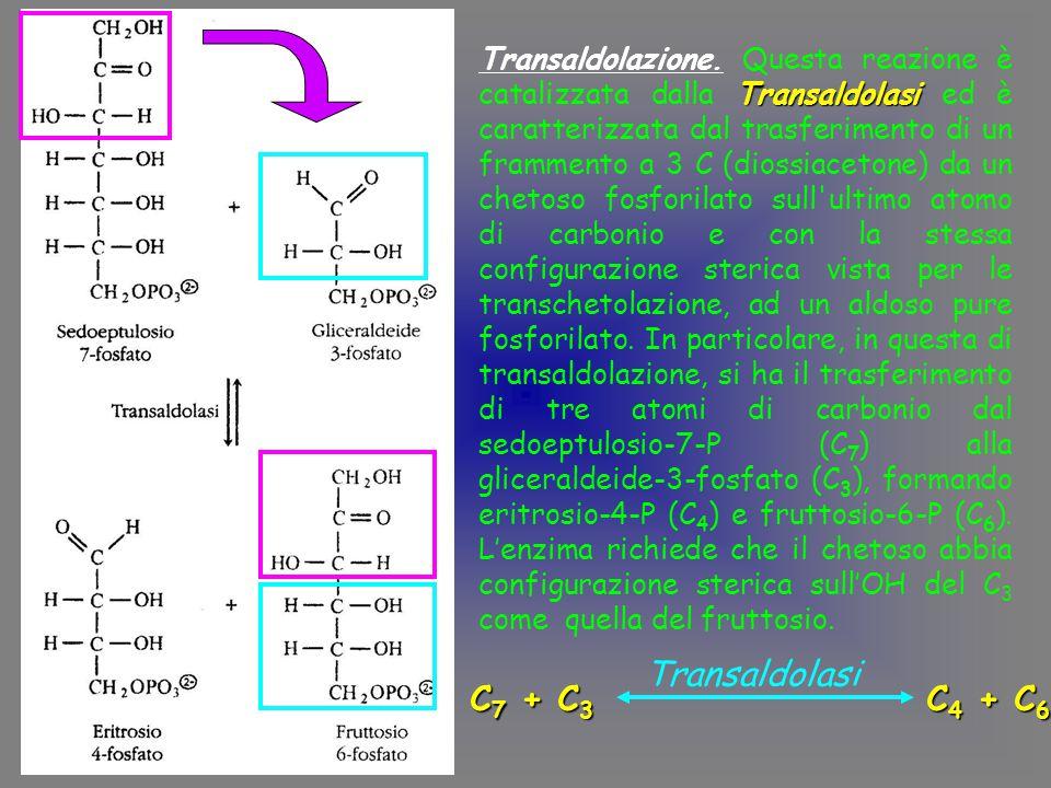 Transaldolasi Transaldolazione.