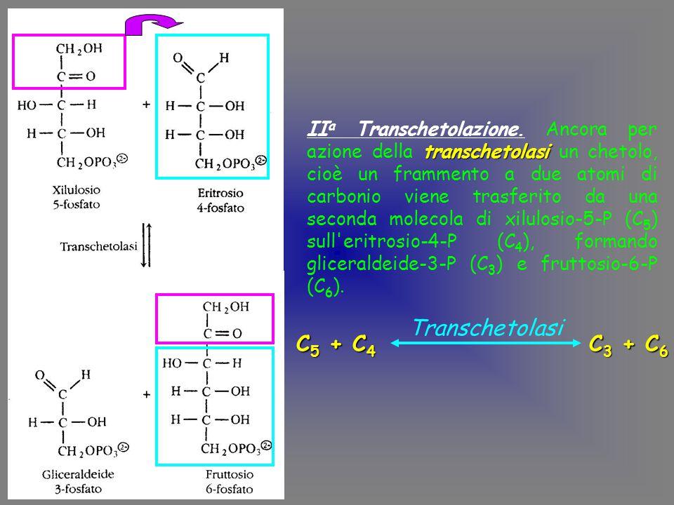 transchetolasi II a Transchetolazione.